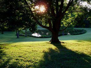 coquitlam-landscaping